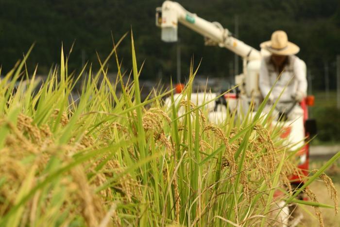 19.03.07 쌀목표가격.jpg